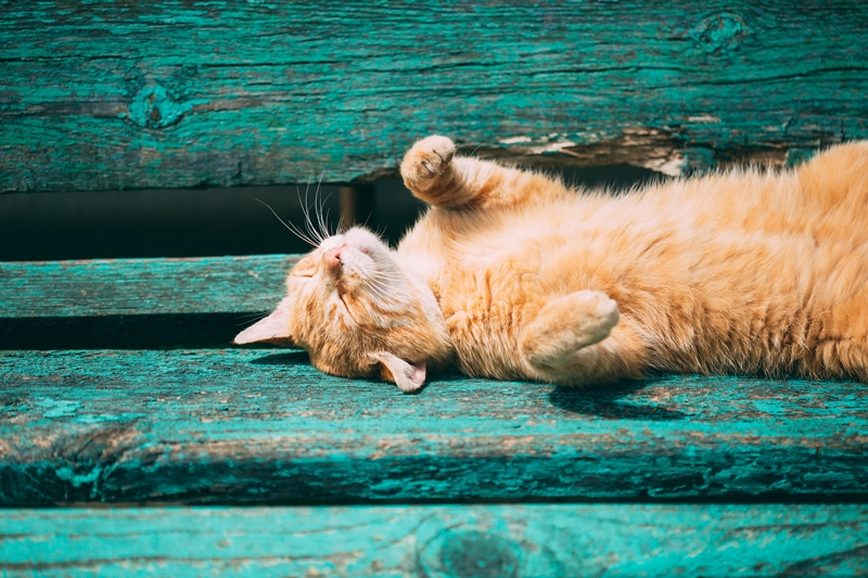 Index - Tech-Tudomány - A macskák nem rossz fejek, csak nem értjük a testbeszédüket