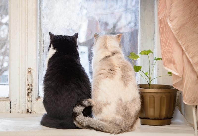 két macska az ajtónál vár és néz