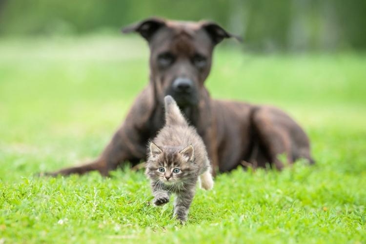 Kutyatartás
