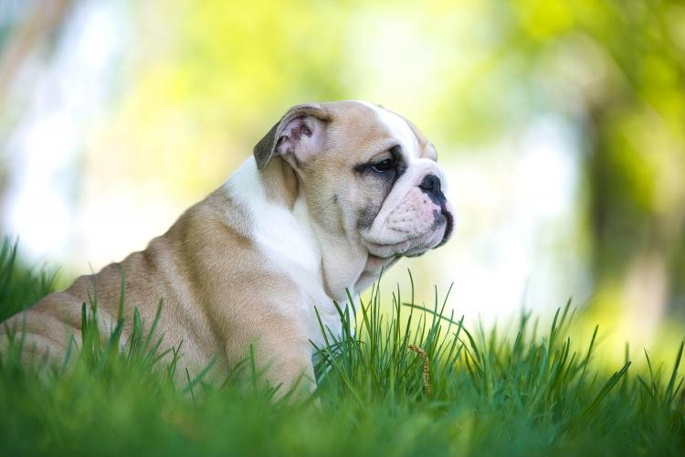 súlycsökkenés és duzzadó szem kutyákban