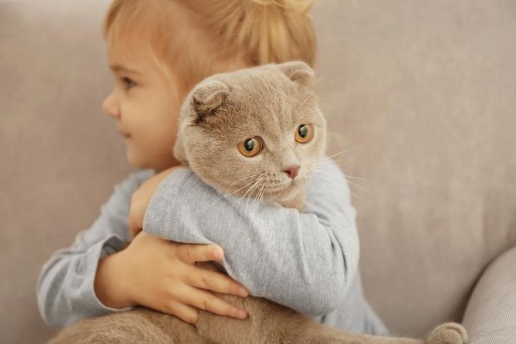 10 kiváló macskafajta gyerekek mellé