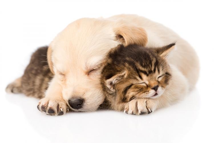 Amikor kutya érkezik a cica mellé | Pet4you.hu