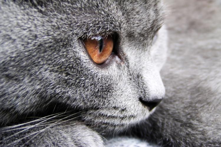 A macskák chlamydia fertőzése bakteriális eredetű 6a5dab19a0