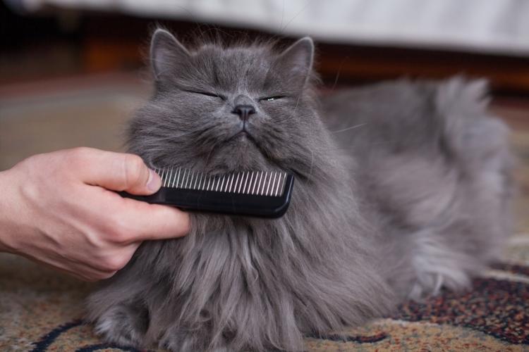 hogyan térjen vissza egy cica a látókörébe homályos látás angioödéma miatt