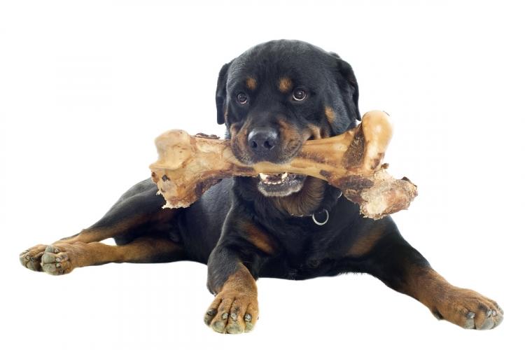 f975e2d76875 Miért NE adjon csontot a kutyának? | Pet4you.hu