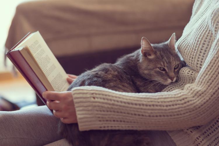 hogyan élnek a macskák látás nélkül