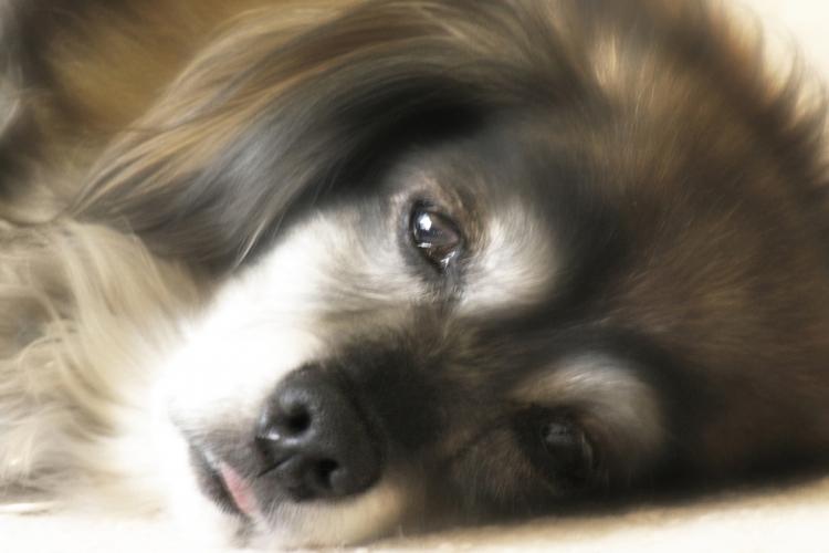 háziállat-vizsgálat megmagyarázhatatlan fogyás érdekében