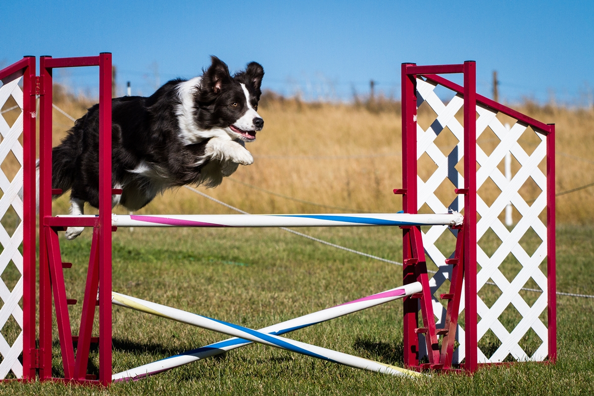 Agility Senior OPEN 2019