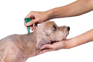férges kutya kezelése