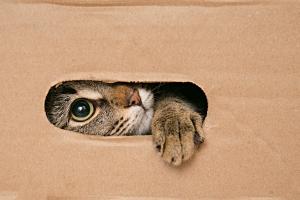 hogyan térjen vissza egy cica a látókörébe